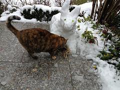 Snow bunny mum